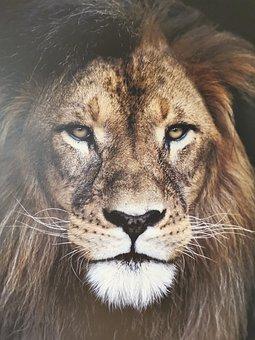 Lion, Animal, Wildlife, Mammal, Big Cat, Wild Animal
