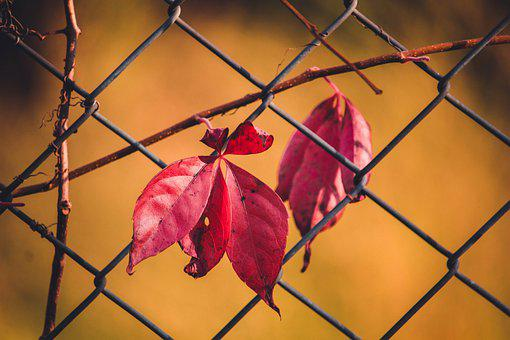 Leaves, Red Leaves, Fence, Demarcation, Autumn Leaves
