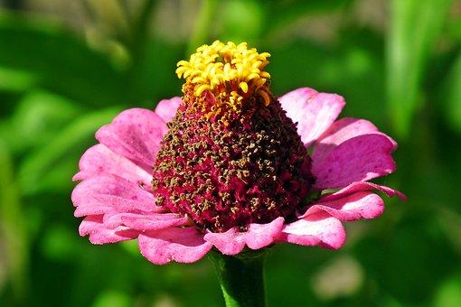 Flower, Petals, Bloom, Blossom, Nectar, Pollen