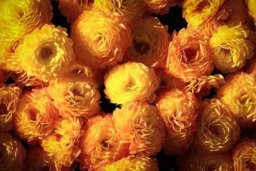Chrysanthemum, Flowers, Yellow Flowers, Orange Flowers