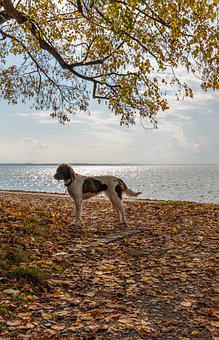 Dog, Canine, Pet, Domestic, Lake Constance, Animal
