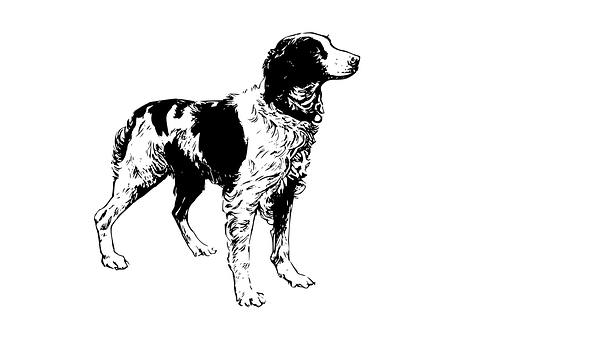 Dog, Domestic, Animal, Pet, Canine, Line Drawing
