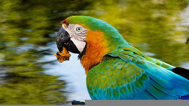 Parrot, Colorful, Macaw, Bird, Psittacoidea, Exotic