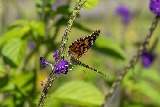Butterfly, Wings, Flower, Butterfly Wings
