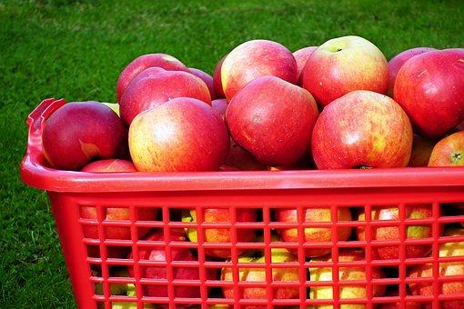 Apples, Fruits, Basket, Basket Of Apples, Apple Basket