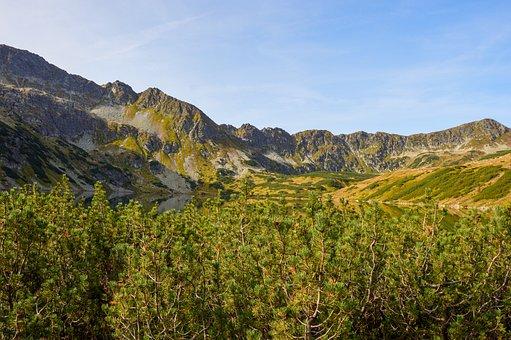 Mountains, Trees, Lake, Mountain Range, Peak, Summit