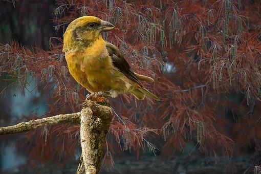 Bird, Loxia Curvirostra, Brach, Leaves, Foliage