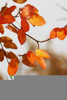 Autumn, Leaves, Foliage, Tree, Branches