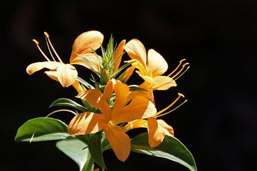 Flowers, Yellow Flowers, Leaves, Sunlight, Bloom