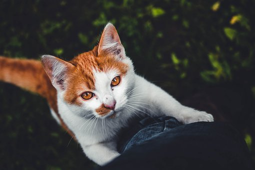 Cat, Kitten, Feline, Pet, Cute, Animal, Eyes, Look