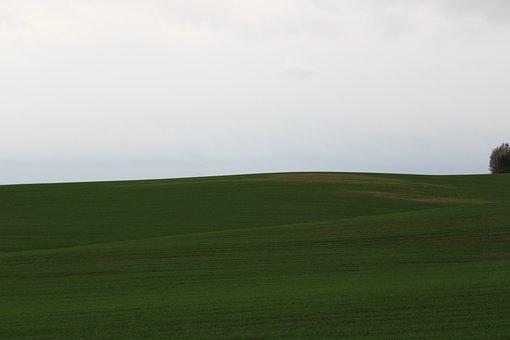 Field, Grass, Plains, Grasslands, Grassy