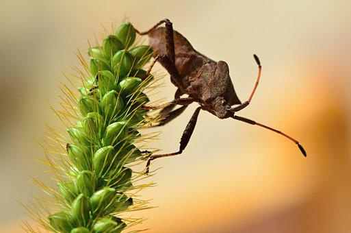Beetle, Bug, Insect, Flower, Plant, Antennae