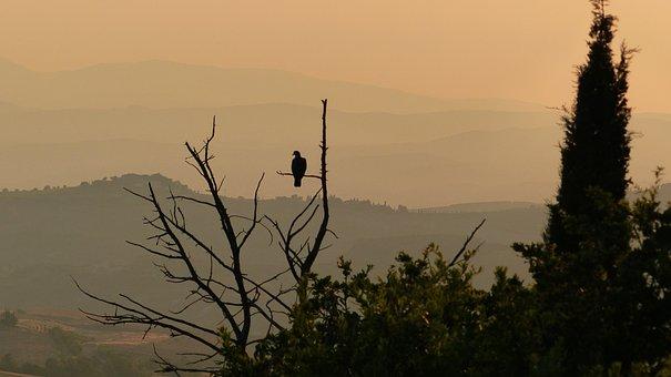 Bird, Beak, Wings, Feathers, Plumage, Tree, Branch