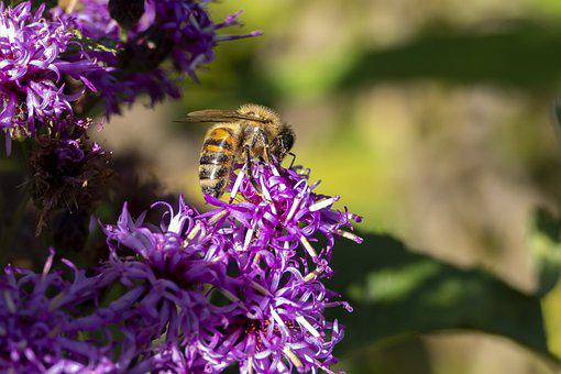 Bee, Flowers, Insect, Pollinate, Pollination