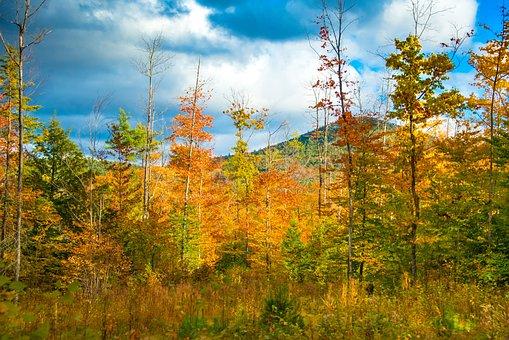 Trees, Autumn, Fall, Autumn Leaves, Autumn Foliage