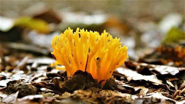 Coloured, Agaric, Yellow, Nature, Toxic, Fungi, Natural