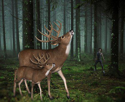 Forest, Animals, Deer, Fantasy, Trees, Animal, Mammal