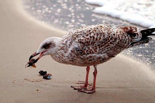 Seagull, Bird, Animal, Gull, Ring-billed Gull, Seabird