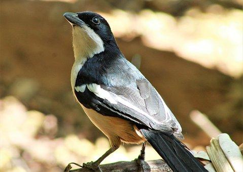 Bird, Feathers, Beak, Plumage, Nature