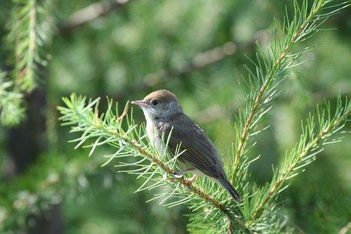 Bird, Branch, Perched, Perched Bird, Beak, Wings