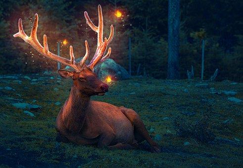 Deer, Animal, Fairytale, Butterflies, Illuminated