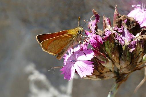 Butterfly, Flowers, Wings