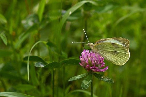 Butterfly, Flower, Pollinate