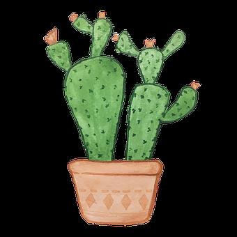 Cacti, Plant, Decoration, Succulent, Plant Pot, Flora