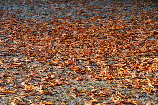 Leaves, Foliage, Autumn, Fall, Dry Leaves, Dried Leaves