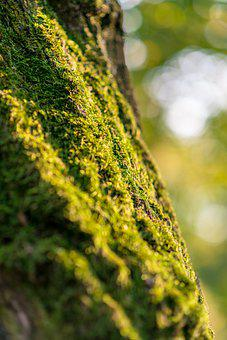 Moss, Tree, Nature, Wood, Flora, Forest