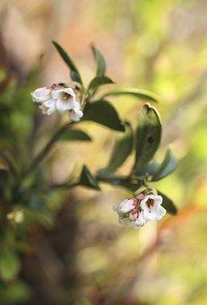 Flowers, White Flowers, Florets, Bloom, Blossom, Flora