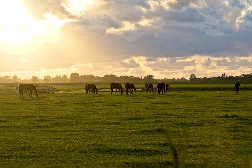 Horses, Moon Horses, Pastures, Grazing, Paddock, Grass