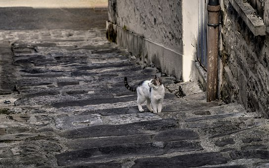 Cat, Stray Cat, Staircase, Street Cat