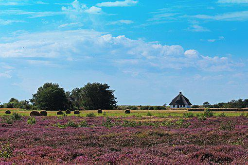 Hiddensee, Thatched Roof, Baltic Sea, Vacations