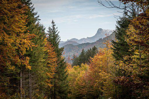 Forest, Trees, Autumn, Fall, Woods, Woodland, Mountains