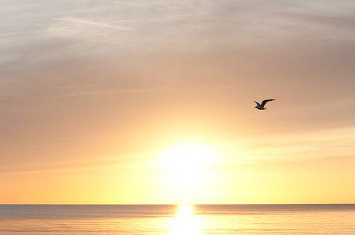 Sunset, Sea, Bird, Flying, Gull, Sun, Sunlight, Horizon