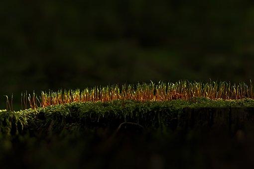 Moss, Forest, Moss Spores, Forest Floor