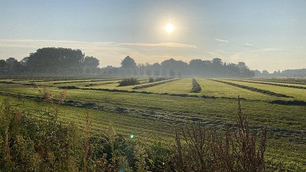 Field, Morning, Sunrise, Dew, Landscape, Fog, Mist