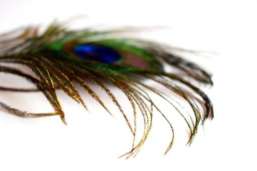 Feather, Peacock, Bird, Lighweight, Colorful