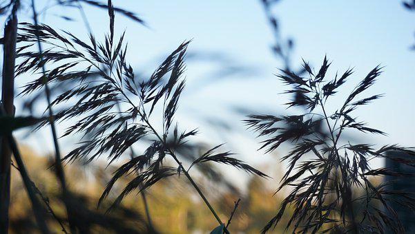 Mood, Autumn, Grasses, October, Mourning, Plant, Nature
