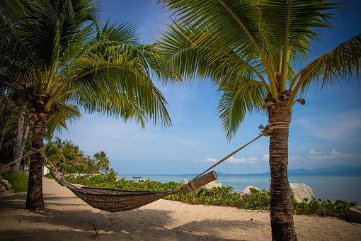 Palm Trees, Beach, Hammock, Coconut Trees, Sand, Rest