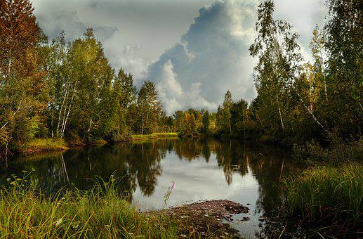 Lake, Forest, Trees, Pond, Water