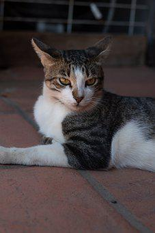 Cat, Animal, Feline, Pet, Kitten, Mammal, Portrait