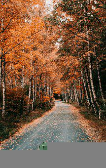 Path, Trees, Autumn, Tree Lined, Fallen Leaves