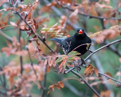 Bird, Perched, Black Bird, Plumage, Feathers