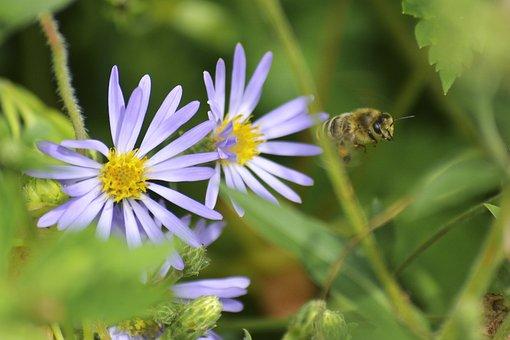Nature, Bee, Flower, Garden, Blossom, Bloom, Close Up