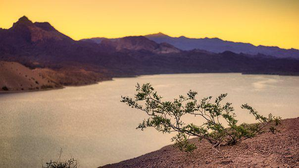 Lakeside, Plant, Sunrise, Dawn, Morning