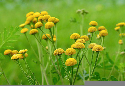 Flowers, Field, Meadows, Yellow Flowers, Flower