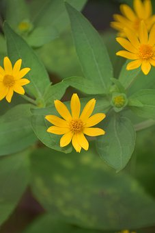 Flowers, Leaves, Yellow Flowers, Blossom