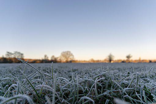Grass, Frost, Winter, Cold, Frozen, Ice